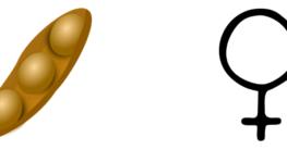 Gynäkomastie durch Soja , Phytoöstrogene