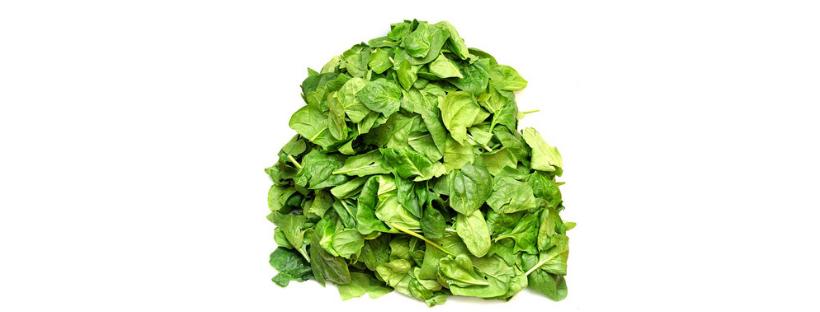 Warum mögen Kinder keinen Spinat
